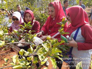 Panen Jambu Kristal Bersama Ibu Wakil Walikota Semarang dan Alumni UPN Yogyakarta