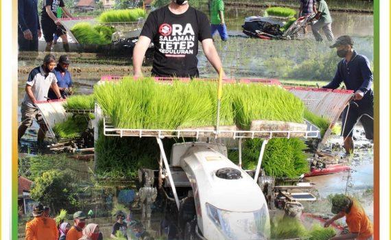 Tanam Padi Lebih Mudah dengan Mesin Rice Transplanter